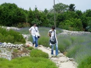 Šetnja u vrtu lavande